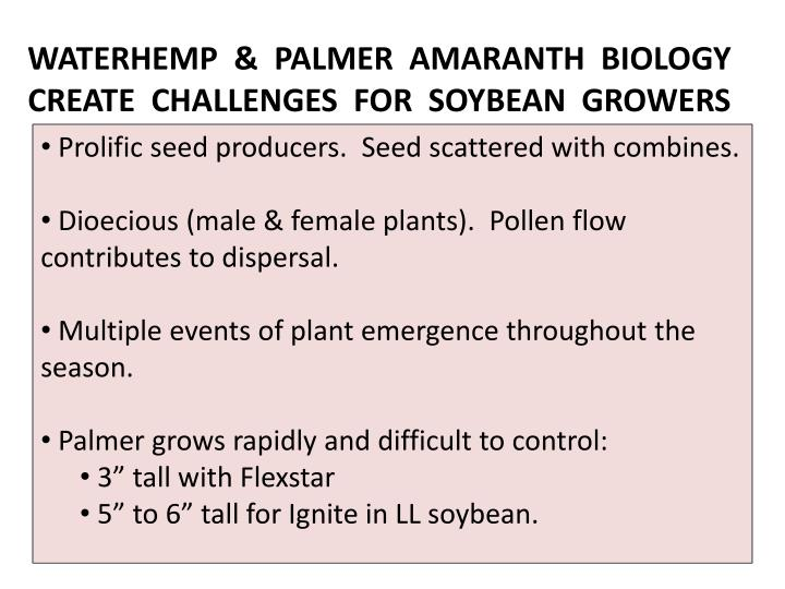 WATERHEMP  &  PALMER  AMARANTH  BIOLOGY CREATE  CHALLENGES  FOR  SOYBEAN  GROWERS