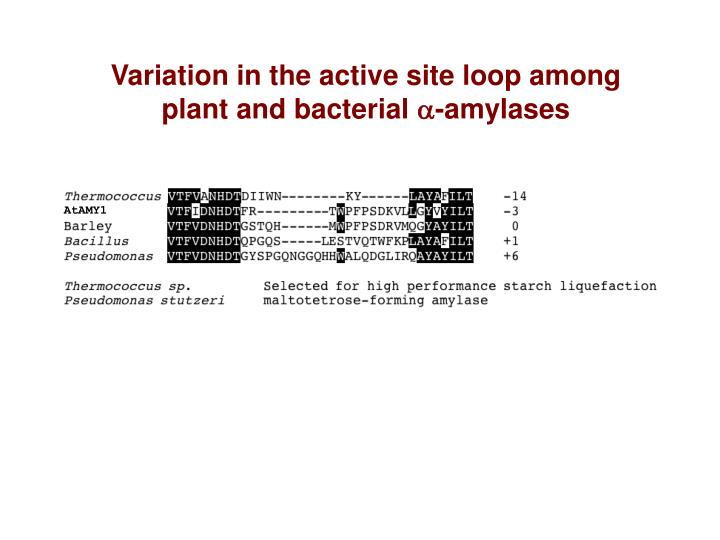 Variation in the active site loop among plant and bacterial
