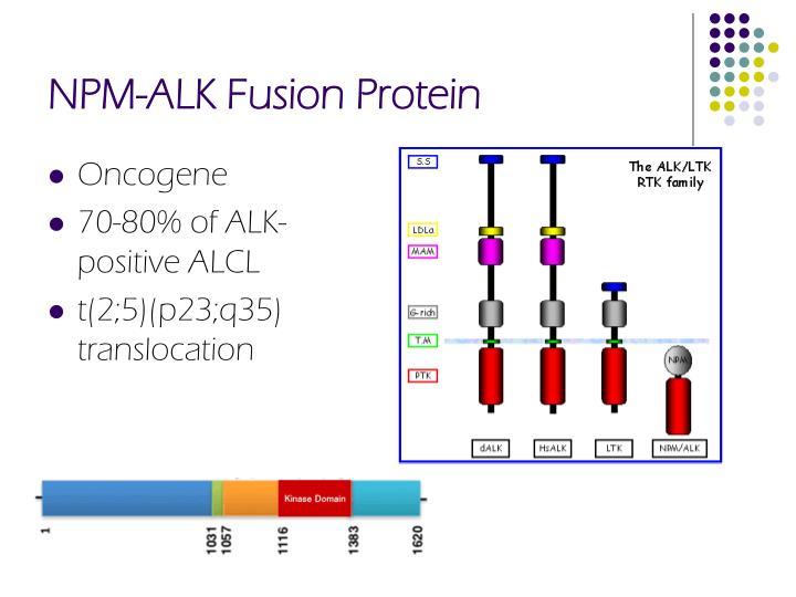 NPM-ALK Fusion Protein