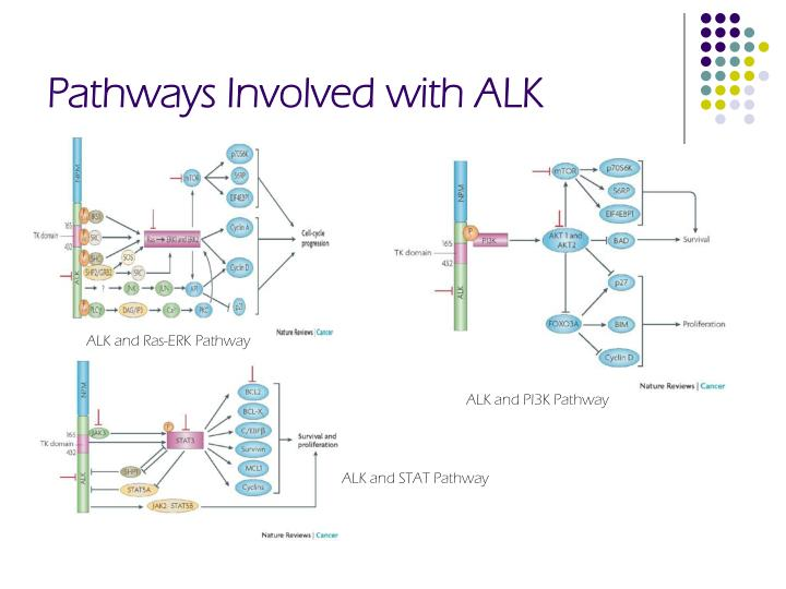 Pathways involved with alk