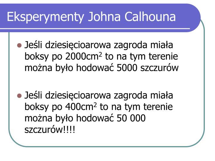 Eksperymenty Johna Calhouna