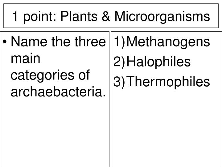 Name the three main categories of archaebacteria.