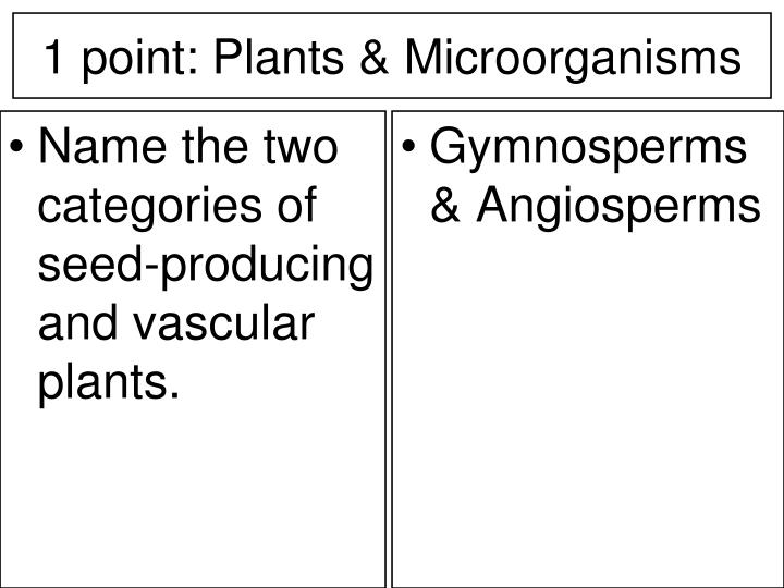 Name the two categories of seed-producing and vascular plants.