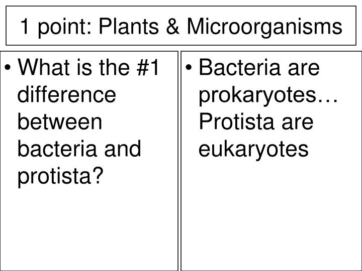 What is the #1 difference between bacteria and protista?