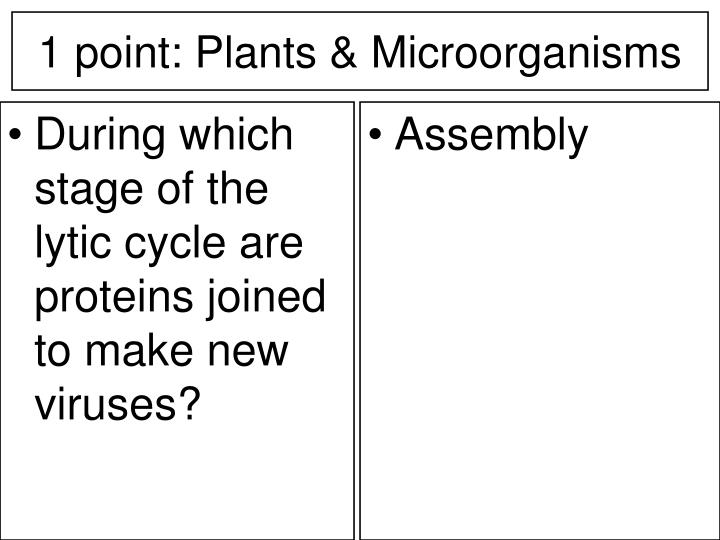 During which stage of the lytic cycle are proteins joined to make new viruses?