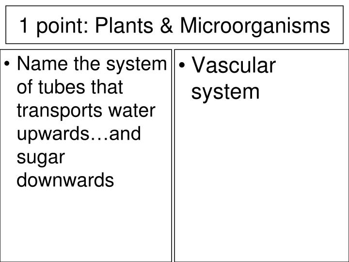 Name the system of tubes that transports water upwards…and sugar downwards