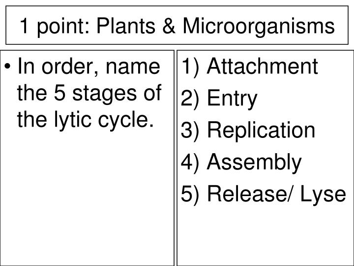 In order, name the 5 stages of the lytic cycle.