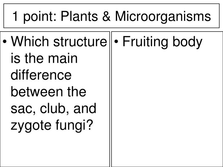 Which structure is the main difference between the sac, club, and zygote fungi?