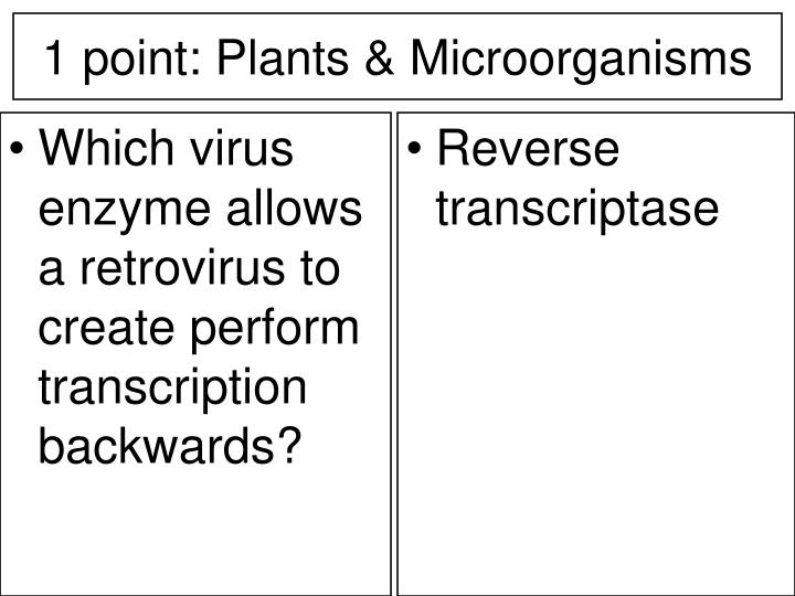 Which virus enzyme allows a retrovirus to create perform transcription backwards?