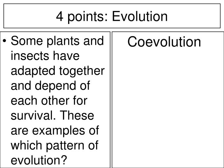 Some plants and insects have adapted together and depend of each other for survival. These are examples of which pattern of evolution?