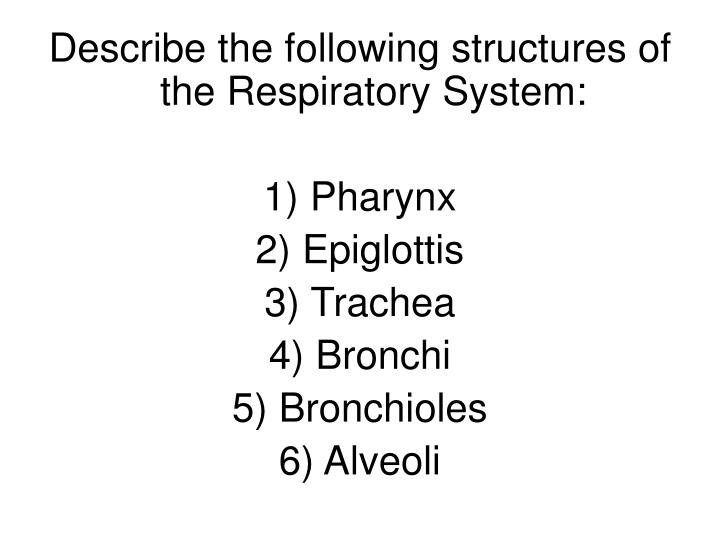 Describe the following structures of the Respiratory System: