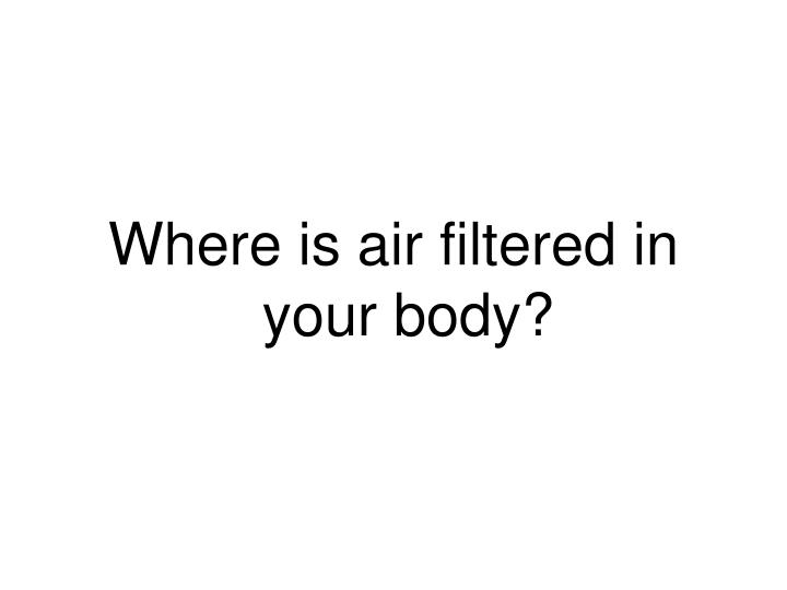 Where is air filtered in your body?