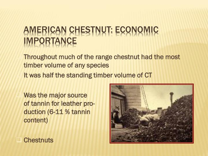 American Chestnut: Economic Importance
