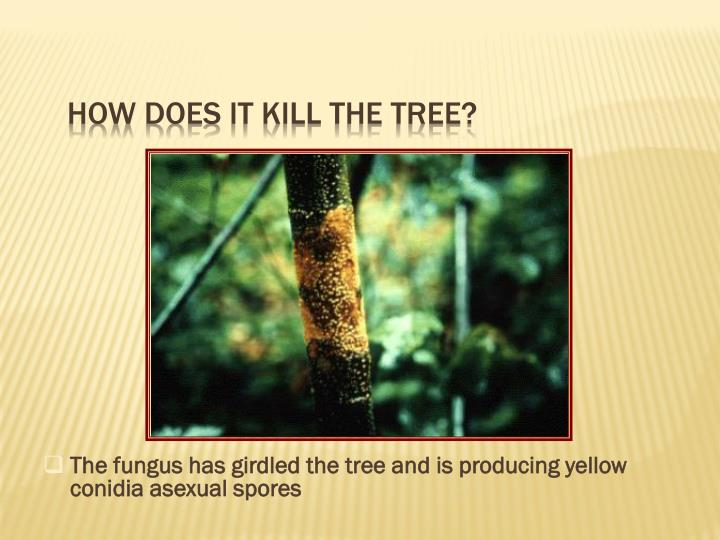 How does it kill the tree?