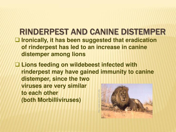 Rinderpest and Canine Distemper