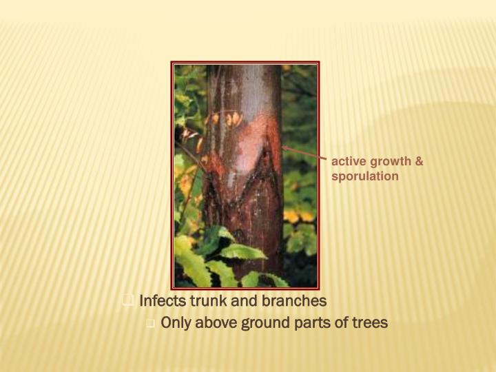 Infects trunk and branches