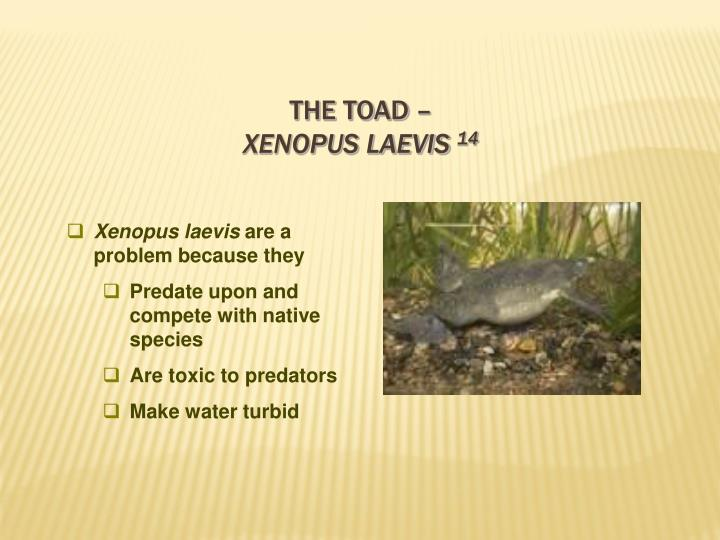 The Toad –