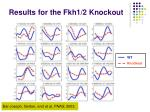 results for the fkh1 2 knockout