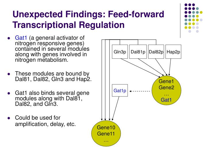 Unexpected Findings: Feed-forward Transcriptional Regulation
