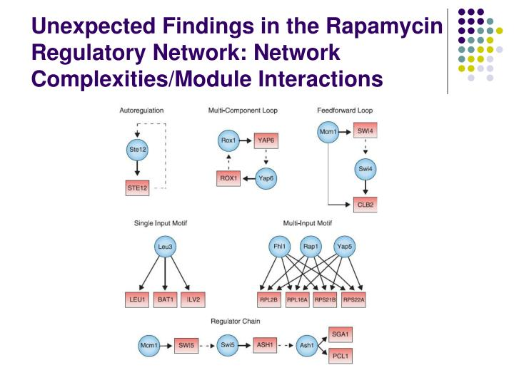 Unexpected Findings in the Rapamycin Regulatory Network: Network Complexities/Module Interactions