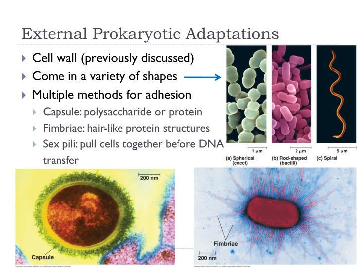 External Prokaryotic Adaptations