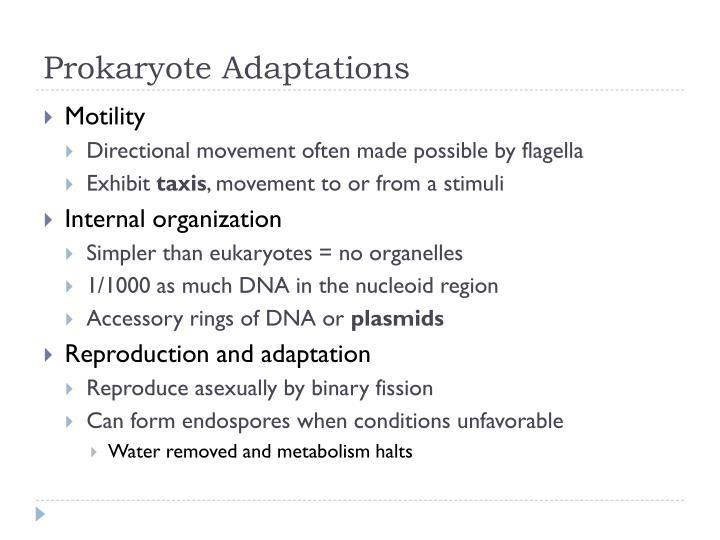 Prokaryote Adaptations