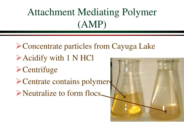 Attachment Mediating Polymer (AMP)