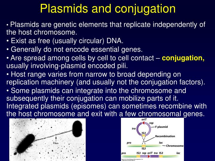 Plasmids and conjugation
