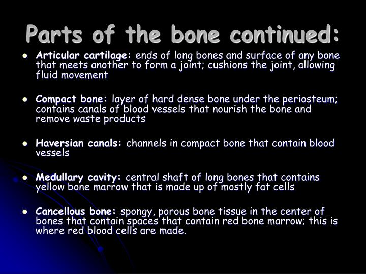 Parts of the bone continued: