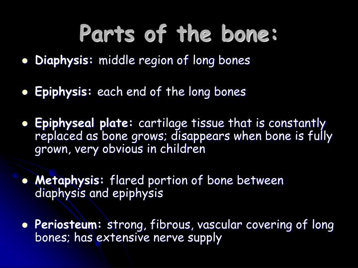 Parts of the bone: