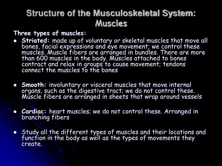 Structure of the Musculoskeletal System: