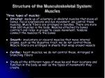 structure of the musculoskeletal system muscles