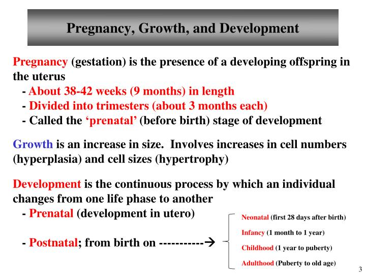 Pregnancy growth and development