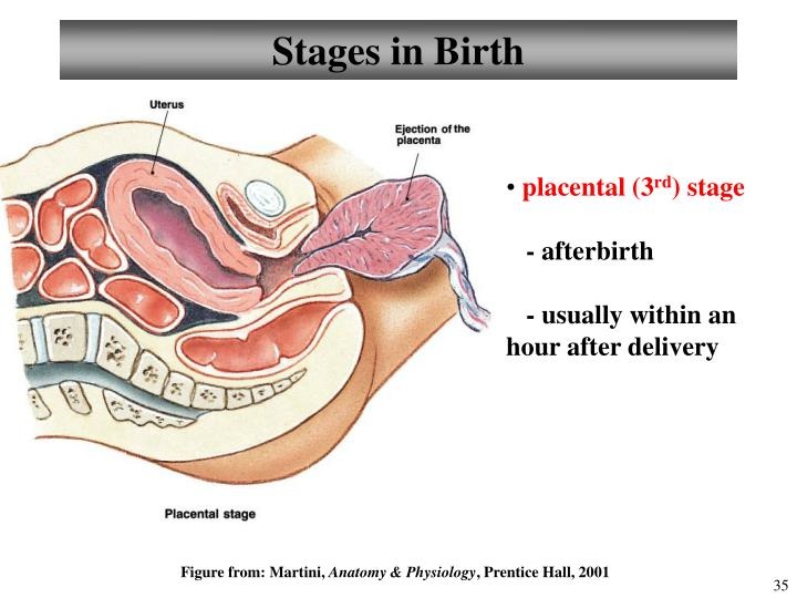 Stages in Birth