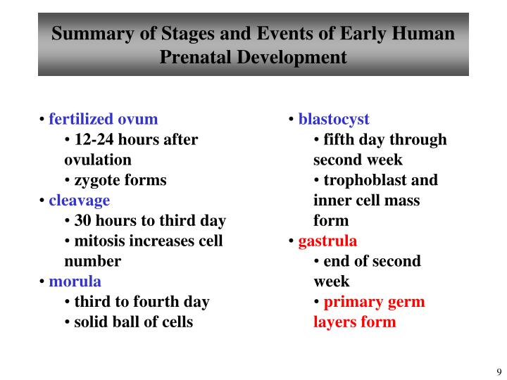 Summary of Stages and Events of Early Human Prenatal Development