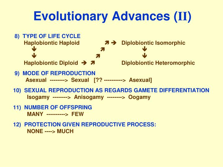 Evolutionary advances ii