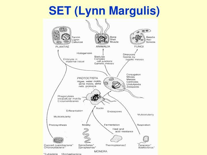 SET (Lynn Margulis)