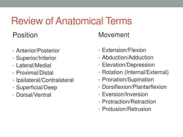 Review of Anatomical Terms