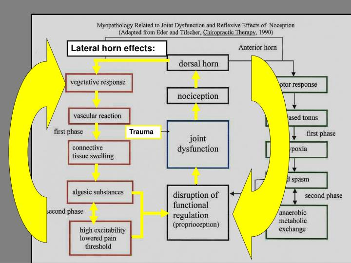 Lateral horn effects: