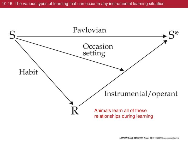 10.16  The various types of learning that can occur in any instrumental learning situation