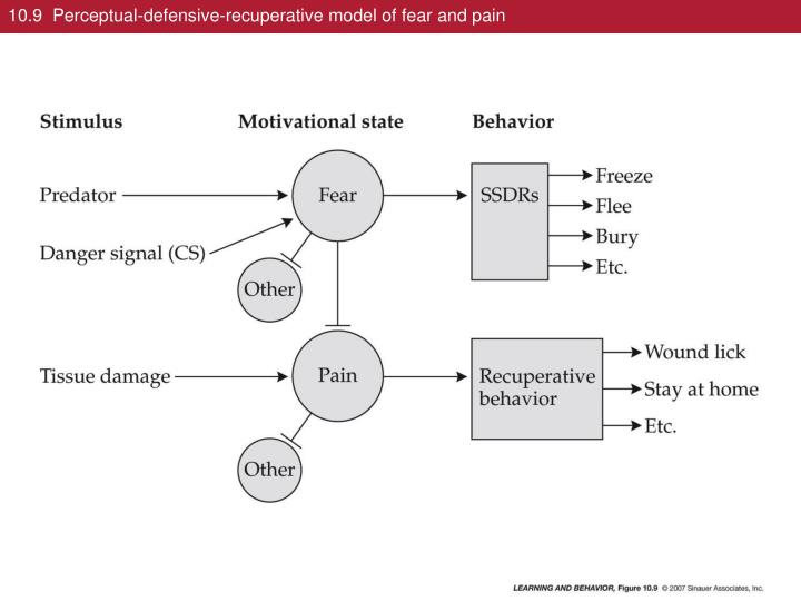 10 9 perceptual defensive recuperative model of fear and pain