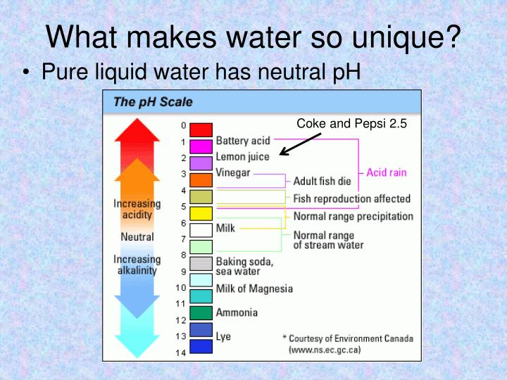 What makes water so unique?