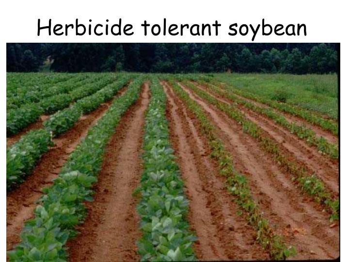 Herbicide tolerant soybean