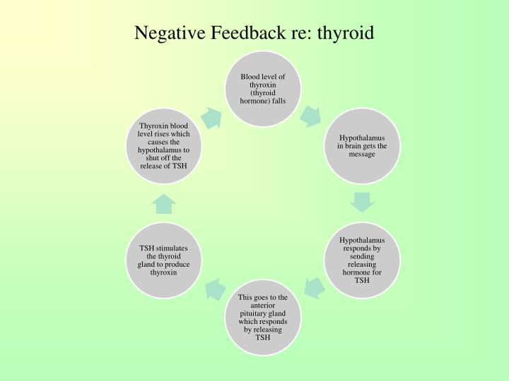 Negative Feedback re: thyroid