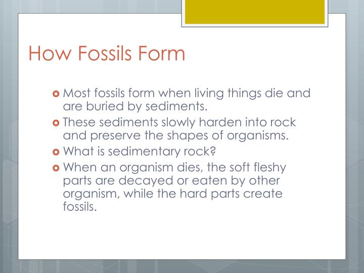How fossils form