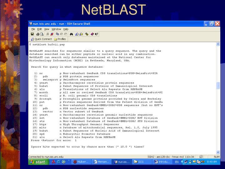 NetBLAST
