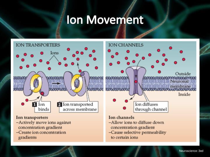 Ion Movement