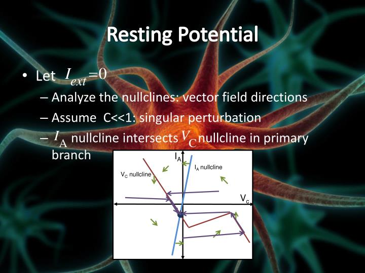 Resting Potential
