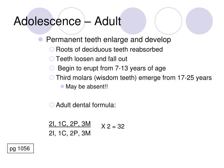 Permanent teeth enlarge and develop