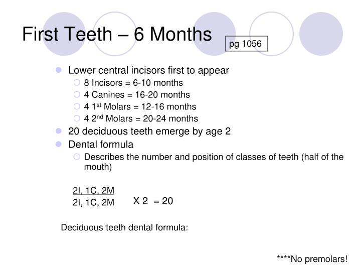 Lower central incisors first to appear